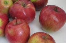 JANSAD – Drzewka, krzewy owocowe i ozdobne