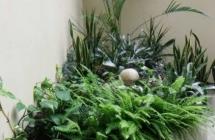 Projekt i aranżacja zieleni, budynek biurowo - mieszkalny, Olsztyn