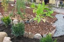 JANSAD - Warsztaty o zieleni