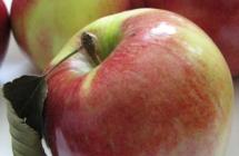 JANSAD – Drzewka, krzewy owocowe iozdobne