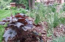 Projekt i aranżacja zieleni, Guzowy Młyn