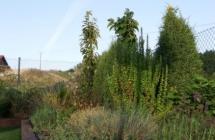 Projekt i aranżacja zieleni, Olsztyn